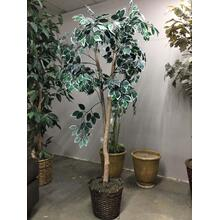 Tree, 6.5'