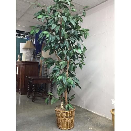 Tree, 7'