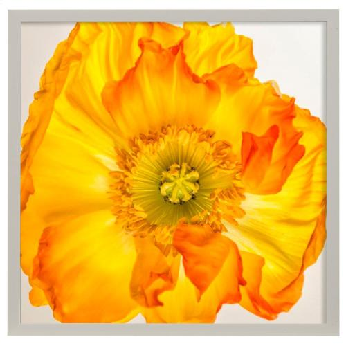 Style Craft - Yellow Poppy II  Made in USA  Artist Print  Faux Wood Frame Under Glass  Attached Hanging Hardwa