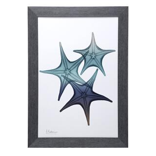 Blue Star Fish I Print Framed Under Glass