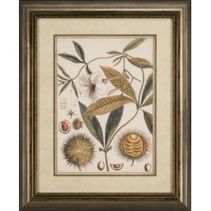 Ivory Botanical Study II