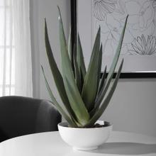 Evarado Aloe Planter