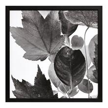 Xray Leaves IV