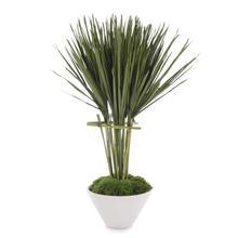 Palmetto Topiary