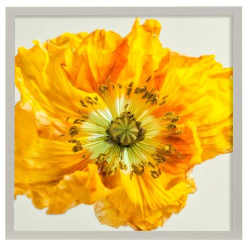 Style Craft - Yellow Poppy I  Made in USA  Artist Print  Faux Wood Frame Under Glass  Attached Hanging Hardwar