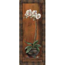 """Orchid Il"" Framed Print Wall Art"