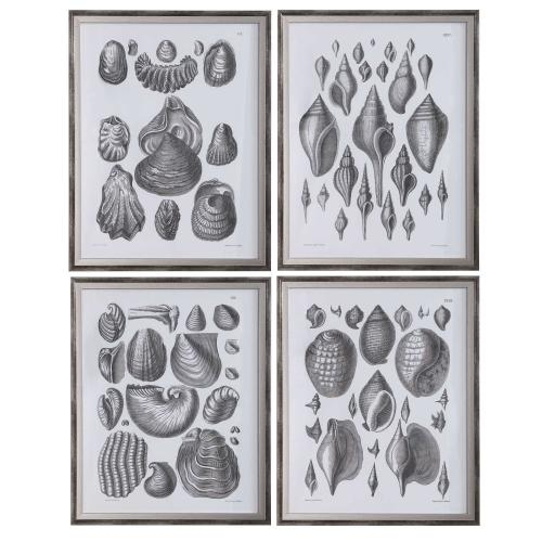 Marine Study Framed Prints, S/4