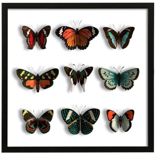 Style Craft - Floating Butterflies  32in X 32in Promotional Framed Print Under Glass  Ready to Hang