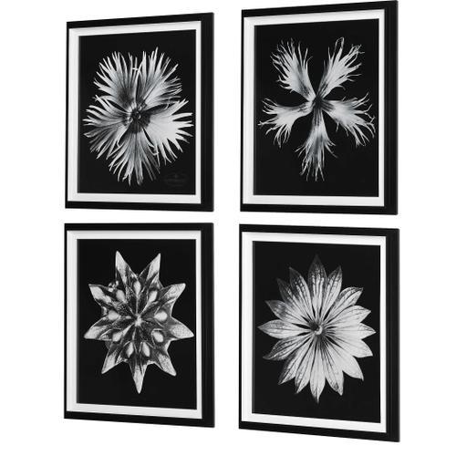 Contemporary Floret Framed Prints, S/4