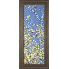 """Spring Poplars IV"" By Sharon Chandler Framed Print Wall Art"