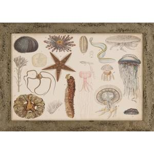 Antique Sealife Chart