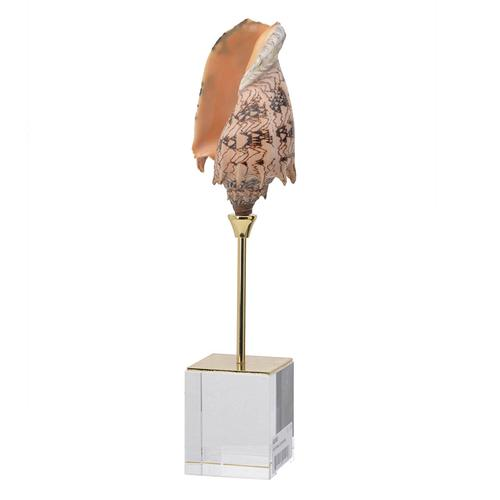 A & B Home - Sunset Conch Shell Accent