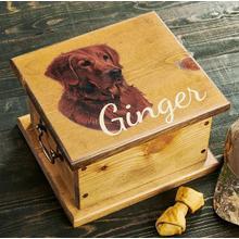 Golden Retriever Sporting Dog