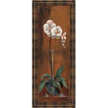 """Orchid I"" Framed Print Wall Art"