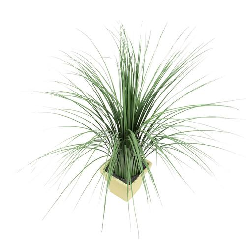 Ornamental Potted Grass