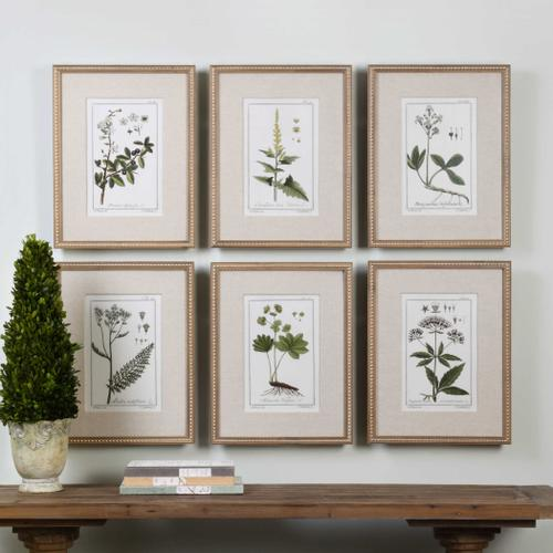 Green Floral Botanical Study Framed Prints, S/6