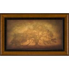 See Details - St. Joe Plantation Oak In Fog 3