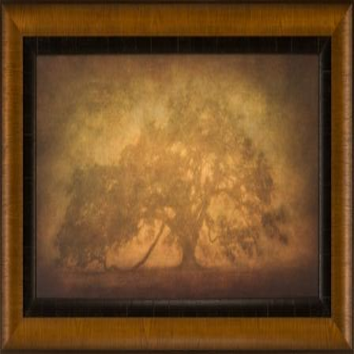 The Ashton Company - St. Joe Plantation Oak In Fog 3