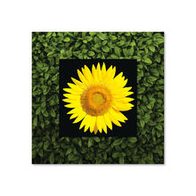 See Details - Sunflower With Background Miniature Fine Wall Art