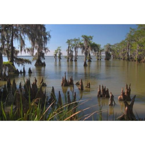 Product Image - 54765  Swamp By Alexey