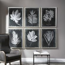 Foliage Framed Prints, S/6