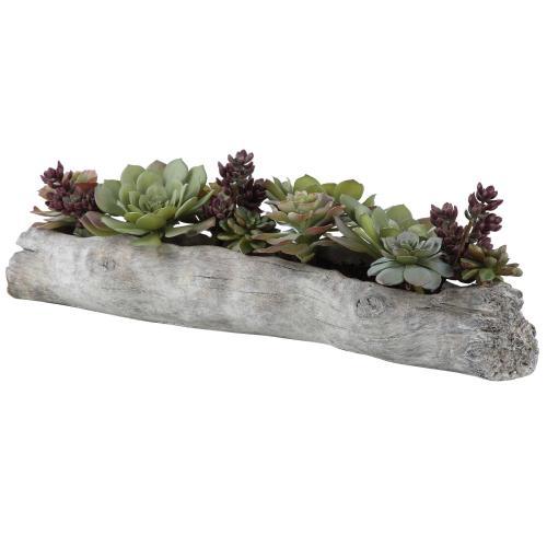 Charita Succulents
