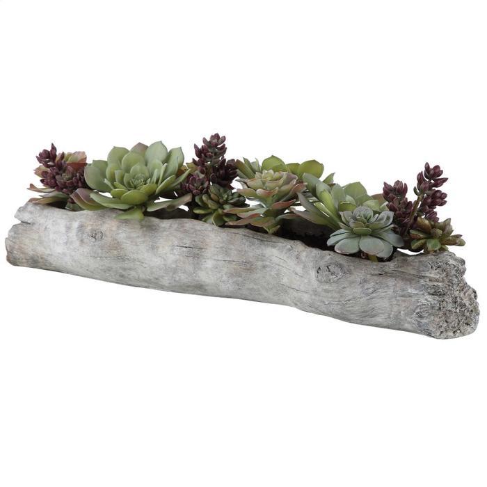 Uttermost - Charita Succulents
