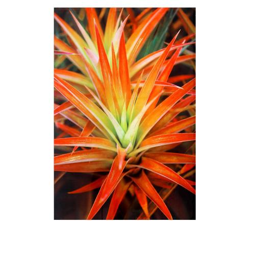 Crestview Collections - Hot Blooms