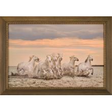 Carmargue Horses-france