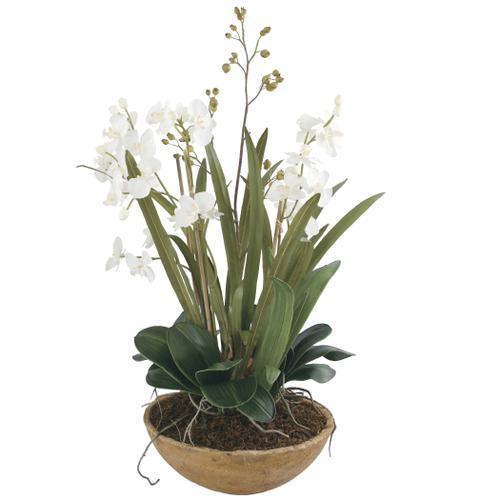 Uttermost - Moth Orchid Planter