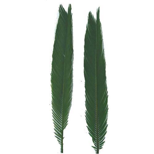 Swag Palm,6P/0.9Lbs