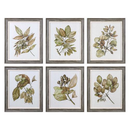 Seedlings Framed Prints, S/6