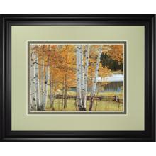 """Birch Beauty"" By Mike Jones Framed Print Wall Art"