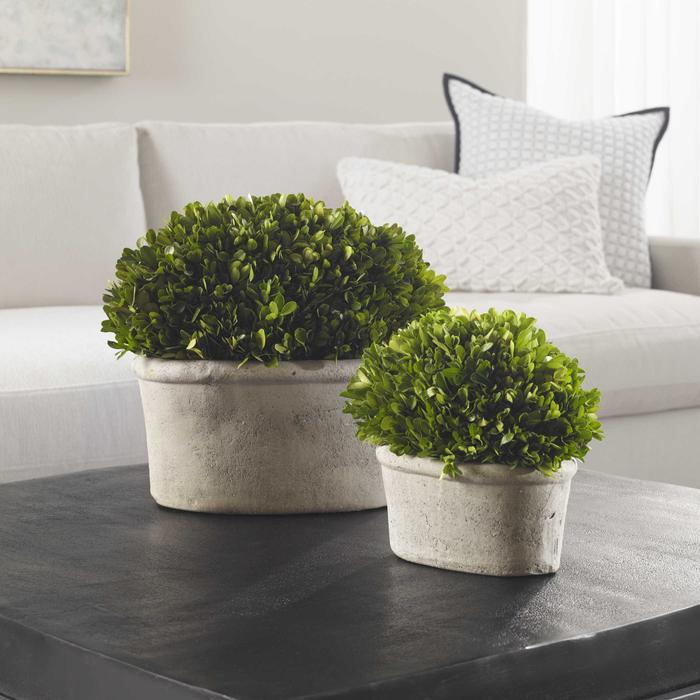 Uttermost - Preserved Boxwood Oval Domes, S/2