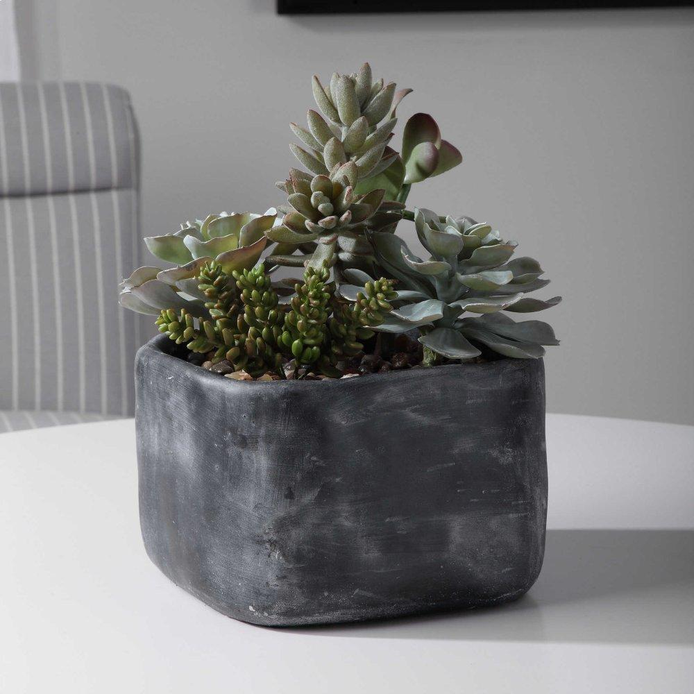 Alverio Succulents