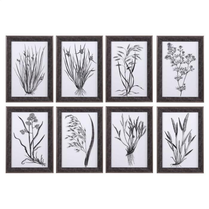 Uttermost - Classic Botany Framed Prints, S/8