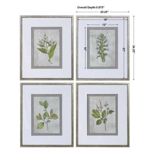 Stem Study Framed Prints, S/4