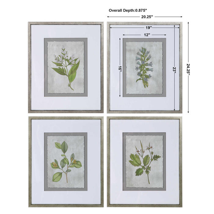 Uttermost - Stem Study Framed Prints, S/4