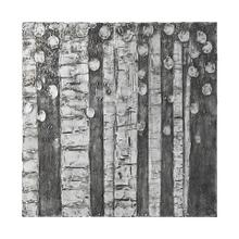 See Details - Birch Trees (41 x 41)