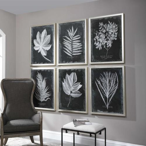Product Image - Foliage Framed Prints, S/6
