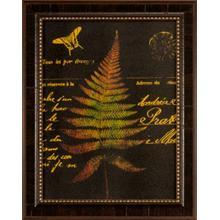 Forest Ferns Ii-16x12