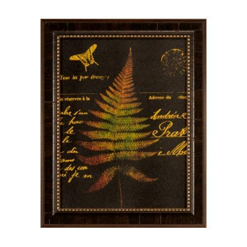 The Ashton Company - Forest Ferns Ii-16x12