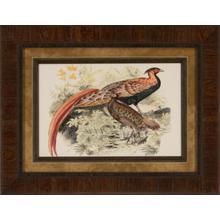 Pheasant Varieties Viii