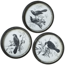 Round Bird Pen & Ink Wall Art with Glass (3 asstd)