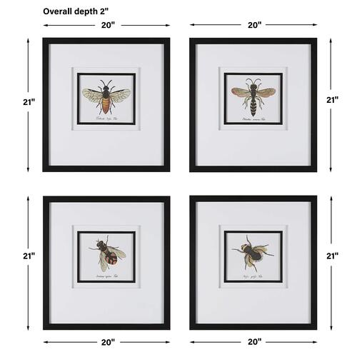 Uttermost - Anthophila Framed Prints, S/4