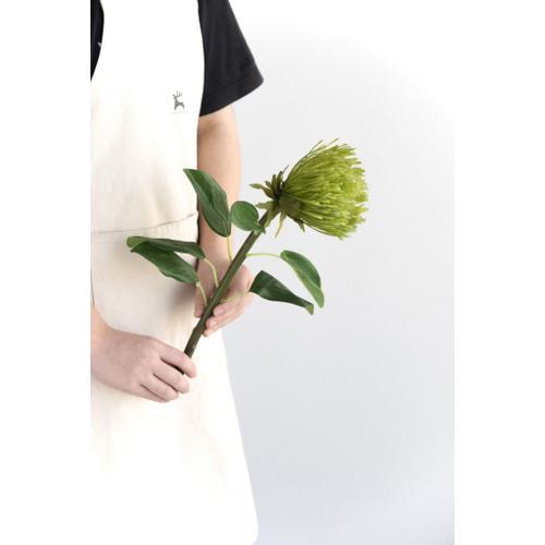 A & B Home - Pincushion Protea Stem GR