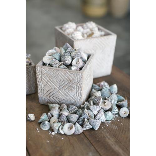3'' x 10'' Trochus Shell (Shell Option)
