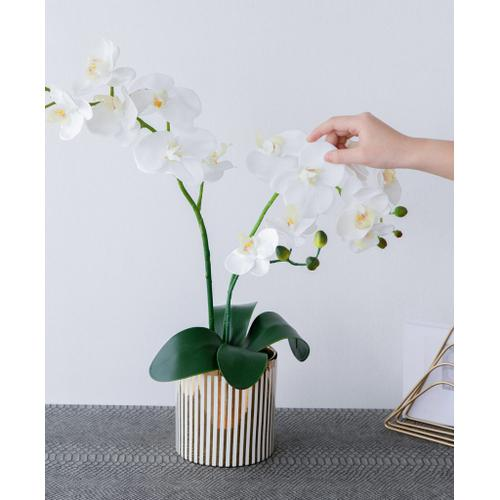 A & B Home - Potted Orchid