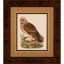 Nozeman Owls I