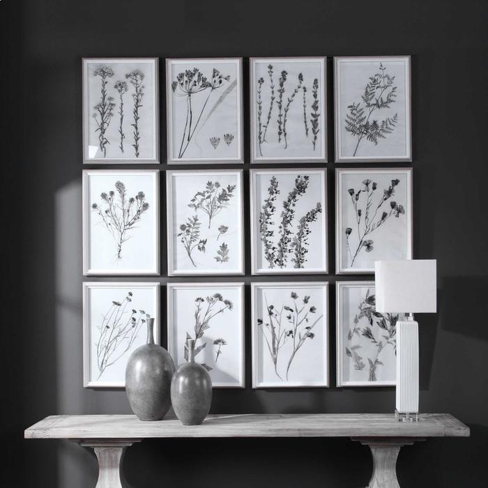 Uttermost - Contemporary Botanicals Framed Prints, S/12